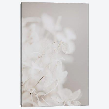 White Wildflowers Canvas Print #LEH174} by Leah Straatsma Canvas Artwork