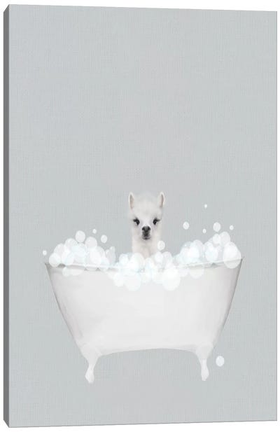 Alpaca Blue Bath Canvas Art Print