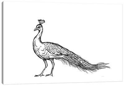 Black Peacock Canvas Art Print