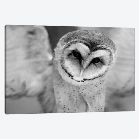 Cute Owl Wings Spread Canvas Print #LEH58} by Leah Straatsma Canvas Art Print