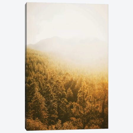 Golden Forest Canvas Print #LEH89} by Leah Straatsma Canvas Artwork