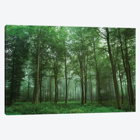 Forest View Canvas Print #LEI11} by Leif Londal Canvas Art