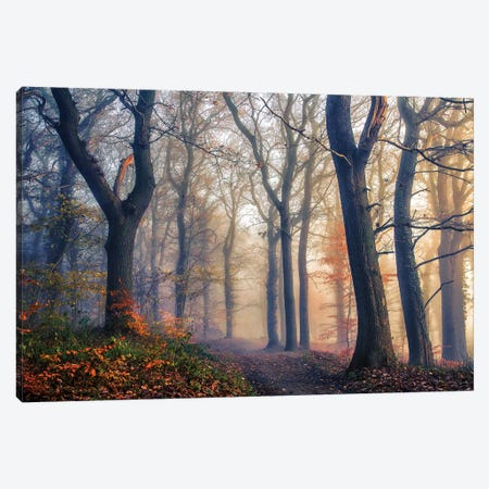The Forest Path. 3-Piece Canvas #LEI13} by Leif Londal Canvas Art
