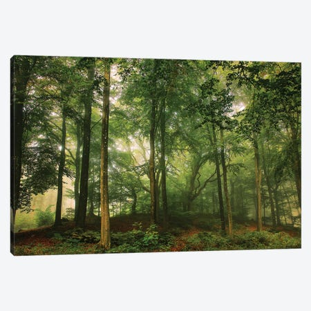 Welcome In The Forest. Canvas Print #LEI14} by Leif Londal Canvas Art Print