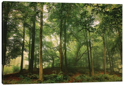 Welcome In The Forest. Canvas Art Print