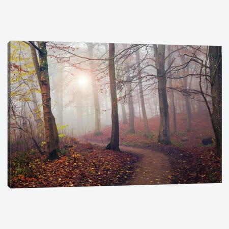 Autumn Sun. Canvas Print #LEI15} by Leif Londal Canvas Print