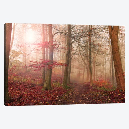 Forest Scene. Canvas Print #LEI16} by Leif Londal Canvas Print