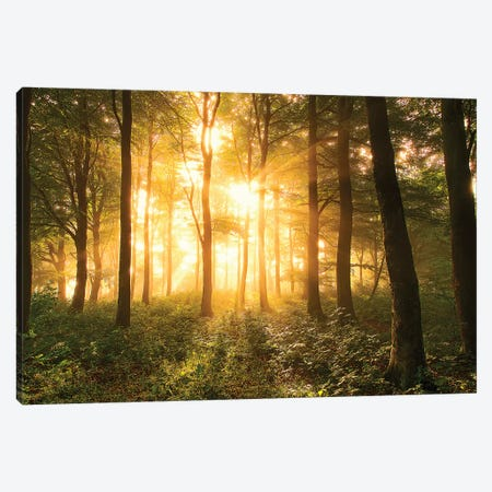Light in The Forest. Canvas Print #LEI1} by Leif Løndal Art Print