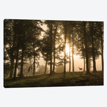 Deer In The Morning Mist. Canvas Print #LEI6} by Leif Londal Canvas Art