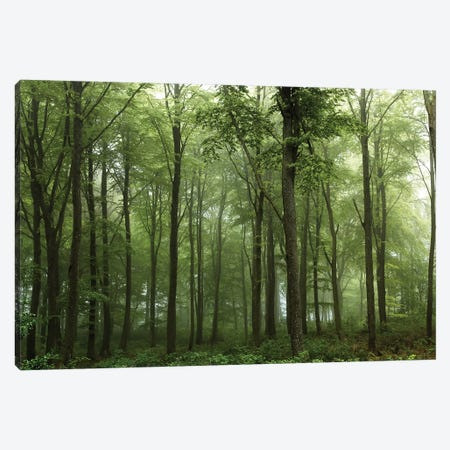 Forest... Canvas Print #LEI7} by Leif Londal Canvas Wall Art