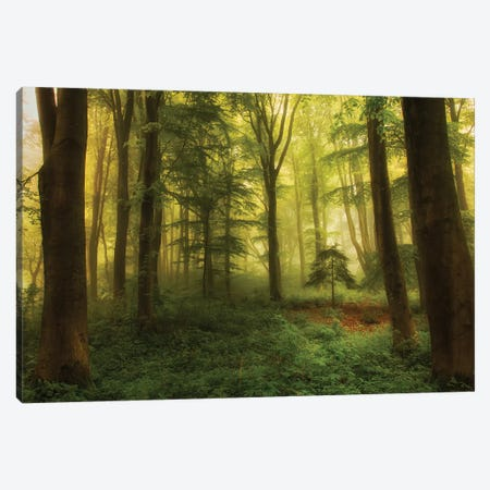 The Little Tree Canvas Print #LEI8} by Leif Londal Canvas Print