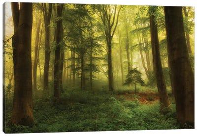 The Little Tree Canvas Art Print
