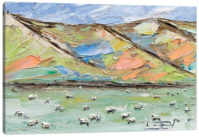 New Zealand Sheep Canvas Art Print