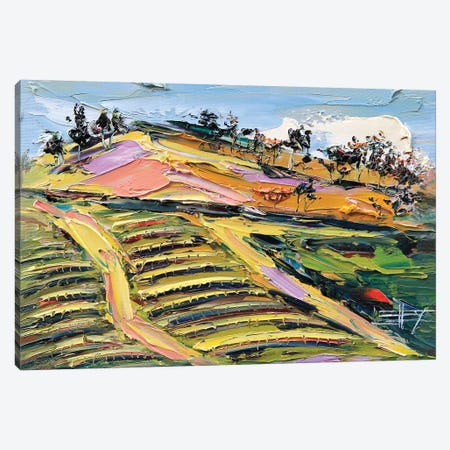 Bay Area Vineyard II Canvas Print #LEL11} by Lisa Elley Canvas Print