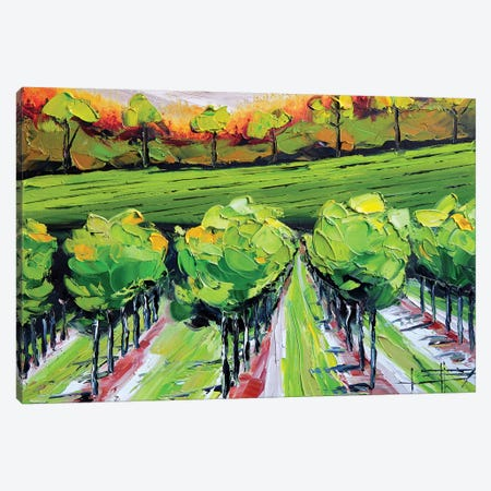 Vineyard B Canvas Print #LEL166} by Lisa Elley Canvas Art