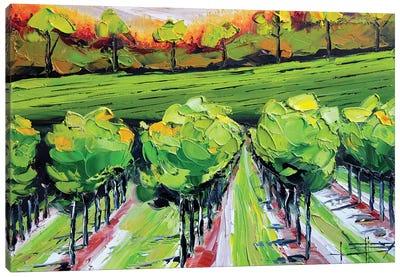 Vineyard B Canvas Art Print