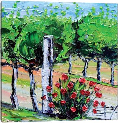 Vineyard Folktale  Canvas Art Print