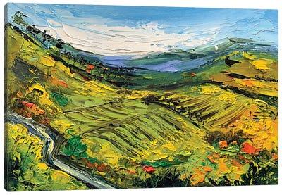 Bay Area Vineyard II Canvas Art Print