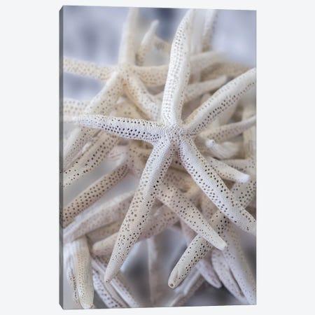 Jumbo White Spider Star, USA Canvas Print #LEN12} by Lisa S. Engelbrecht Canvas Art Print