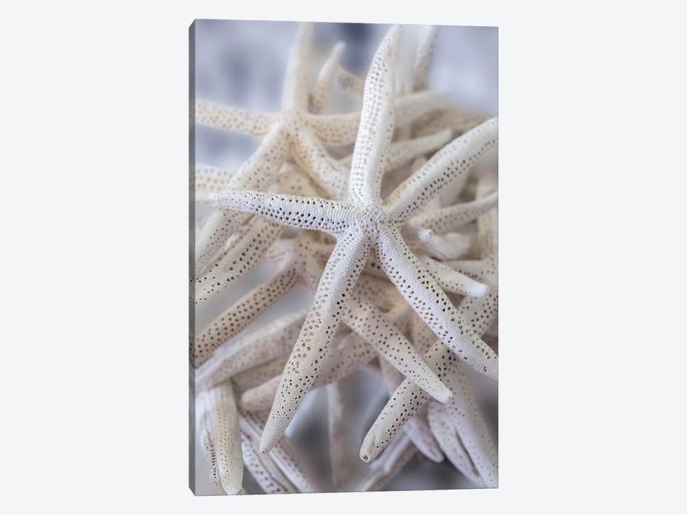 Jumbo White Spider Star, USA by Lisa S. Engelbrecht 1-piece Canvas Artwork