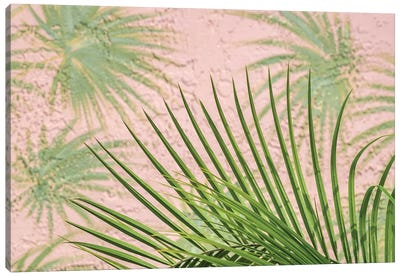 Areca palm in front of painter palm mural, USA Canvas Art Print