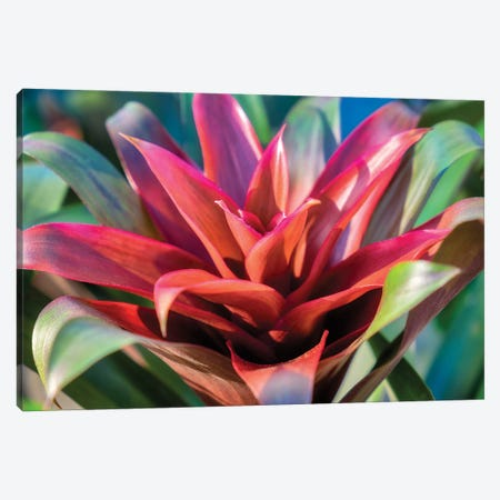 Red and green Bromeliad, USA Canvas Print #LEN14} by Lisa S. Engelbrecht Canvas Artwork