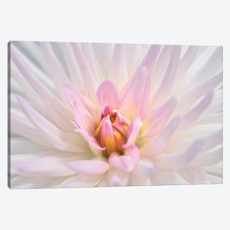 Pink dahlia, USA. 3-Piece Canvas #LEN16} by Lisa S. Engelbrecht Canvas Wall Art