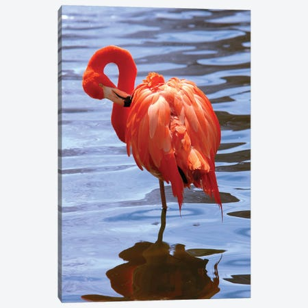 The Beautiful Flamingo Canvas Print #LEN3} by Lisa S. Engelbrecht Canvas Art