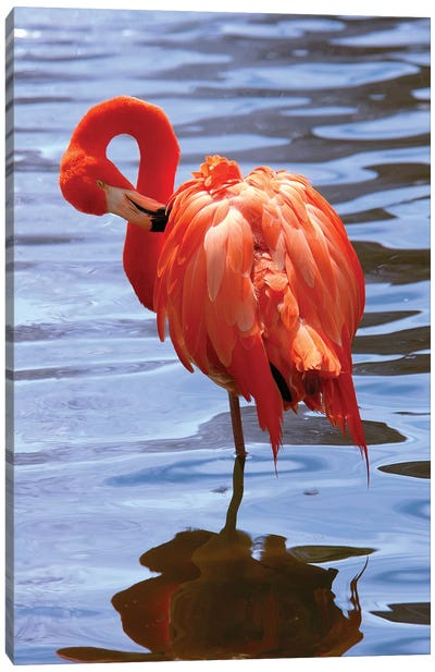 The Beautiful Flamingo Canvas Art Print