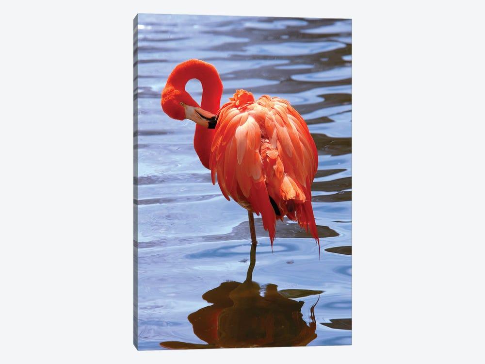 The Beautiful Flamingo by Lisa S. Engelbrecht 1-piece Art Print