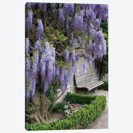 Europe, Austria, Salzburg Stadt, Salzburg, Wisteria In Mirabell Garden Canvas Print #LEN5} by Lisa S. Engelbrecht Art Print