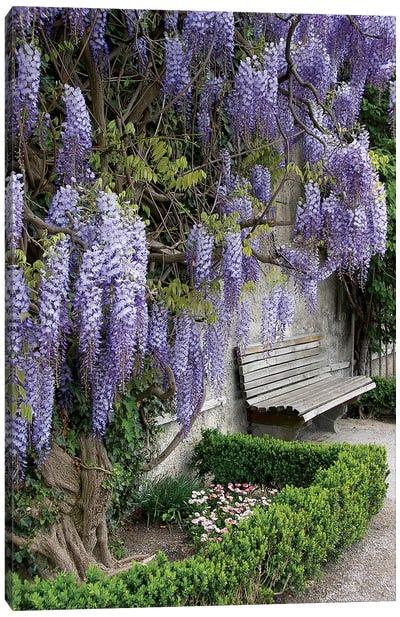 Europe, Austria, Salzburg Stadt, Salzburg, Wisteria In Mirabell Garden Canvas Art Print