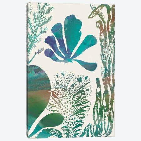 Aquatic Assemblage I Canvas Print #LER115} by Sharon Chandler Canvas Art Print