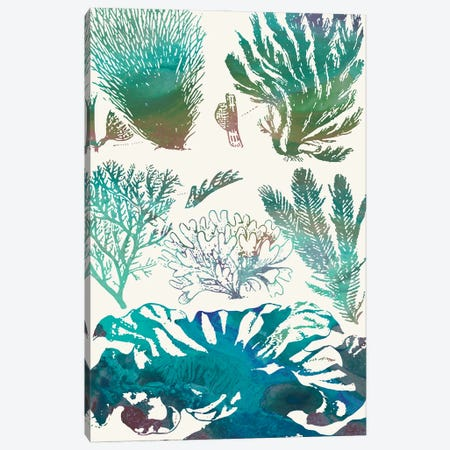 Aquatic Assemblage II Canvas Print #LER116} by Sharon Chandler Art Print