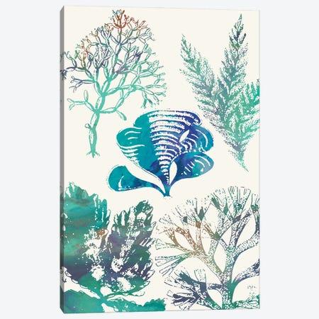 Aquatic Assemblage III Canvas Print #LER117} by Sharon Chandler Canvas Print