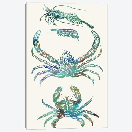 Aquatic Assemblage VIII Canvas Print #LER119} by Sharon Chandler Canvas Wall Art