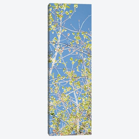 Spring Poplars III Canvas Print #LER15} by Sharon Chandler Canvas Artwork