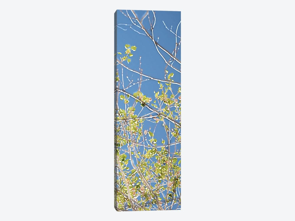 Spring Poplars IV by Sharon Chandler 1-piece Canvas Art Print