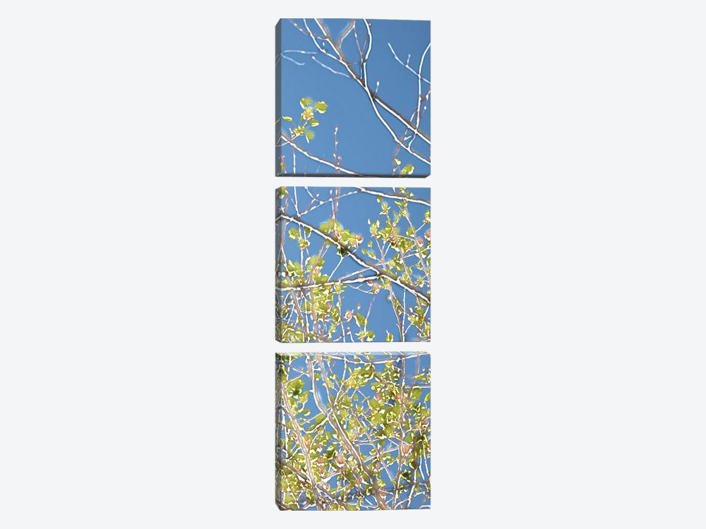 Spring Poplars IV by Sharon Chandler 3-piece Canvas Art Print