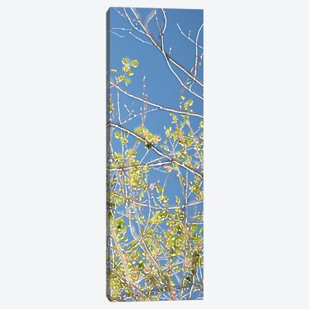Spring Poplars IV Canvas Print #LER16} by Sharon Chandler Canvas Artwork