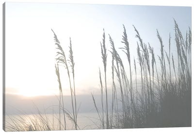Morning Whisper II Canvas Art Print