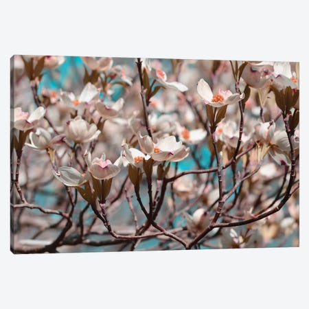 Dogwood Spring I Canvas Print #LER36} by Sharon Chandler Canvas Art
