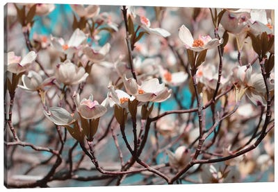 Dogwood Spring I Canvas Art Print