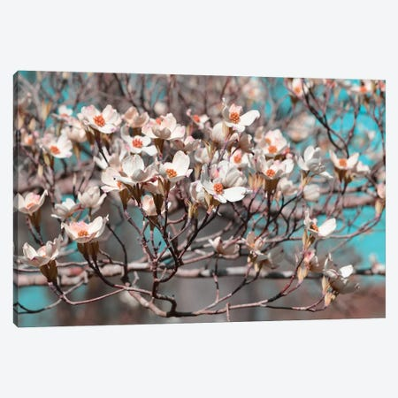 Dogwood Spring II Canvas Print #LER37} by Sharon Chandler Canvas Wall Art