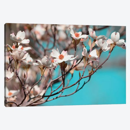 Dogwood Spring III Canvas Print #LER38} by Sharon Chandler Canvas Print