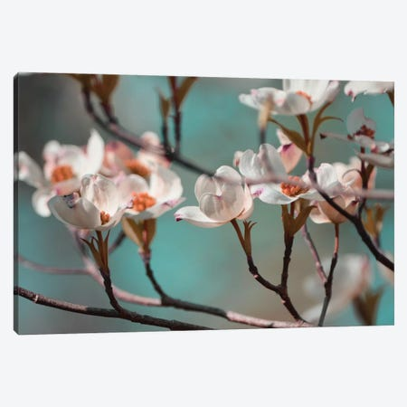 Dogwood Spring IV Canvas Print #LER39} by Sharon Chandler Canvas Print