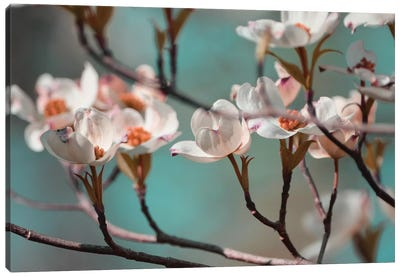 Dogwood Spring IV Canvas Art Print