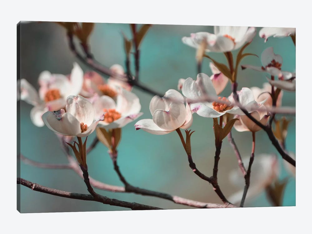 Dogwood Spring IV by Sharon Chandler 1-piece Canvas Wall Art