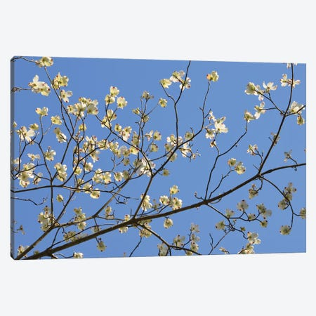 Petals & Sky I Canvas Print #LER40} by Sharon Chandler Canvas Wall Art