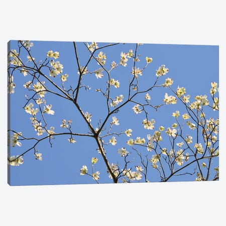 Petals & Sky II Canvas Print #LER41} by Sharon Chandler Canvas Wall Art